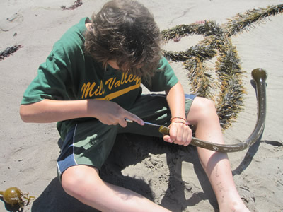 Preteen using a knife to make a kelp trumpet